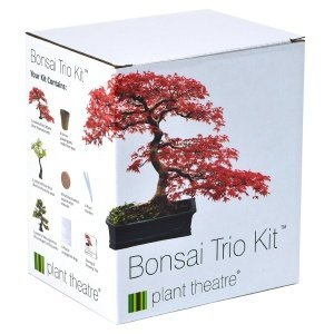 Plant Theatre Bonsai-Trio Kit