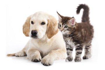 Geschenk erlebnis mit tieren