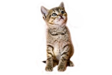Geschenke Für Katzenbesitzer Und Ihre Katzen Miau